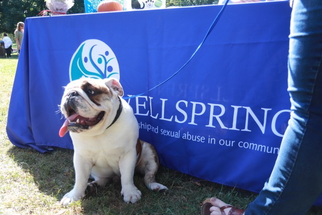 Dog sitting and panting in front of a table with a blue cloth that has the Wellspring logo on it